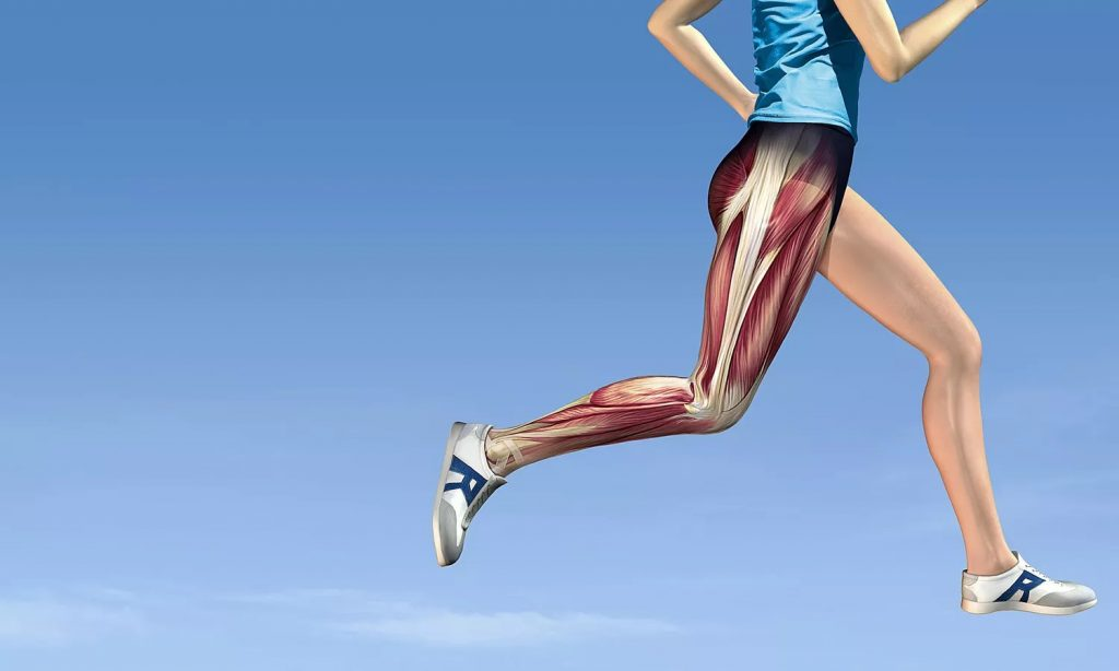 فیزیوتراپی تاندونیت عضله تیبیال خلفی با قوی کردن لگن و زانو